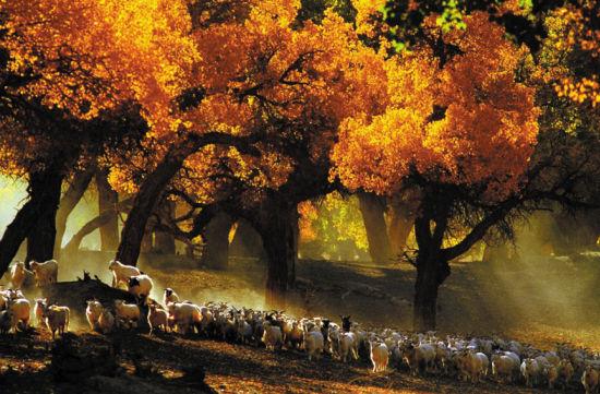色彩绚烂的十月