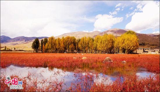 稻城红草地。郝康理 摄