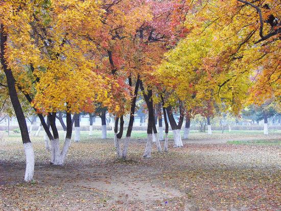 南湖公园深秋的红叶美景(图片来源网络)