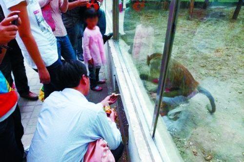 有游客透过通风口喂食动物(来源:大河报)