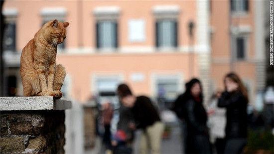 罗马流浪猫废墟