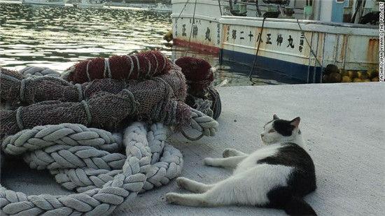 日本第一猫岛