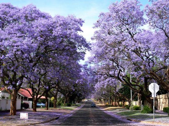 紫薇花铺撒落满了地面