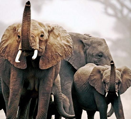 马拉维的 Majete 野生动物保护区
