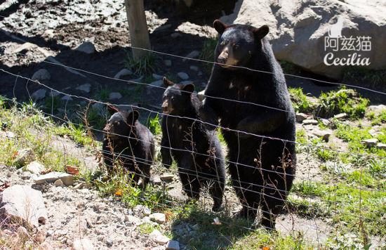 omega野生动物园看野趣加拿大