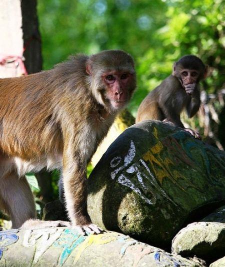 """""""修行中""""的猴子"""