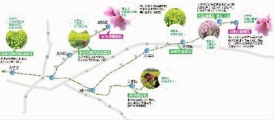 浏阳美丽乡村 油菜花开遍野