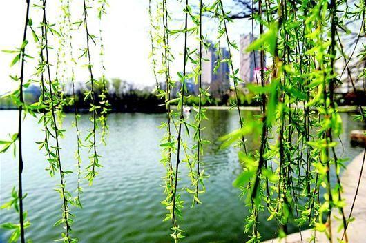 紫阳湖公园