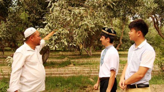 杏仁园主与阿迪力、春杨互相沟通杏仁种植情况