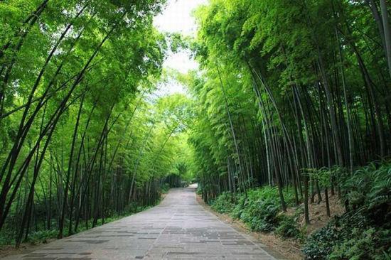 奇花的竹海风景区