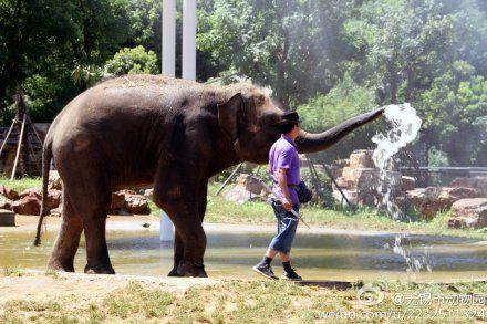 动物园纳凉消暑高招 水果冰坨喷淋齐上阵