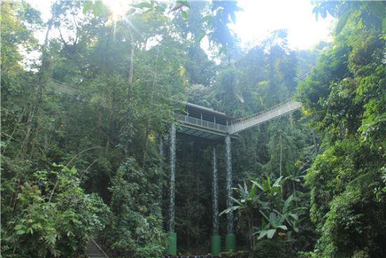 望天树景区空中走廊和雨林廊桥