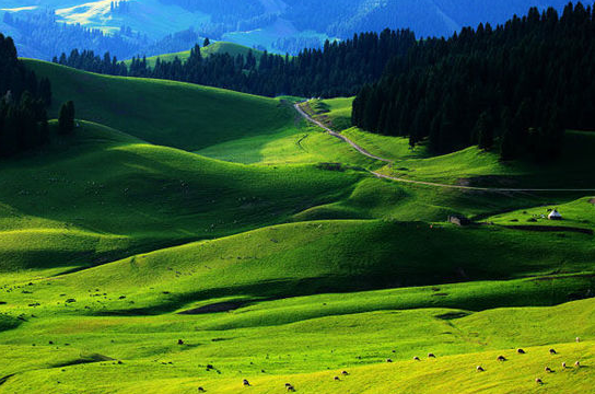江布拉克草原