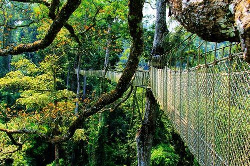 世界第一条树冠走廊