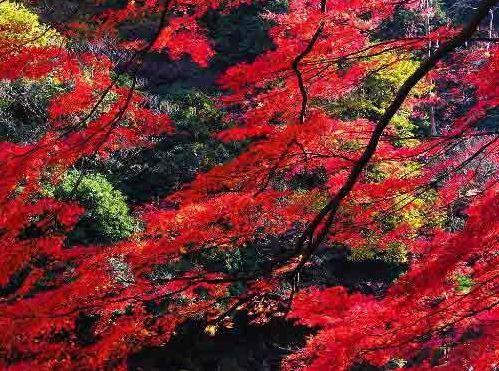 中国 北京 正文    关于云蒙山国家森林公园:云蒙山国家森林公园位于