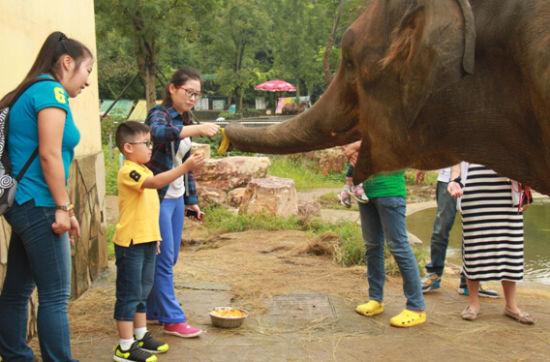 动物月饼diy 动物园动物卖萌过中秋