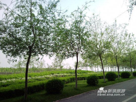 丁香湖环湖骑行(来源:新浪博客安安妈)