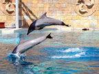 圣淘沙名胜世界 与海豚亲密接触