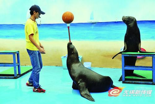 动物园海洋馆欢乐多 国庆长假一起去发现精彩