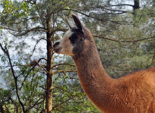 为了迎合小朋友和大人的不同心理,野生动物园还为游客准备了以童话