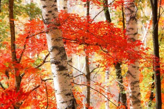 吉林斑斓秋色 看云淡风清鸟翻红叶
