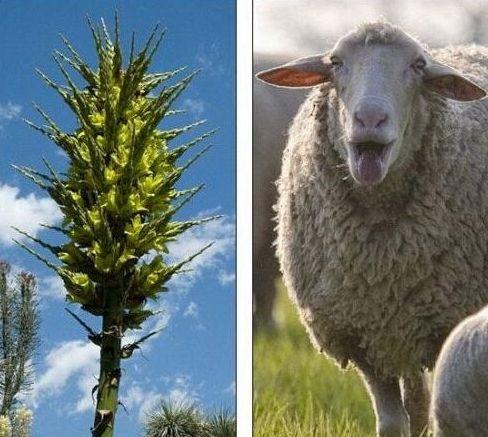 颠覆你的认知 5种会吃动物的植物(组图)