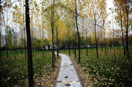 陕西醉美八大校园秋色,风景与公园媲美,快来进来瞅瞅!