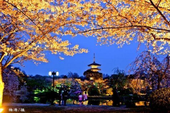 新浪湖北旅游:东湖樱园 图片来自:@梅涛