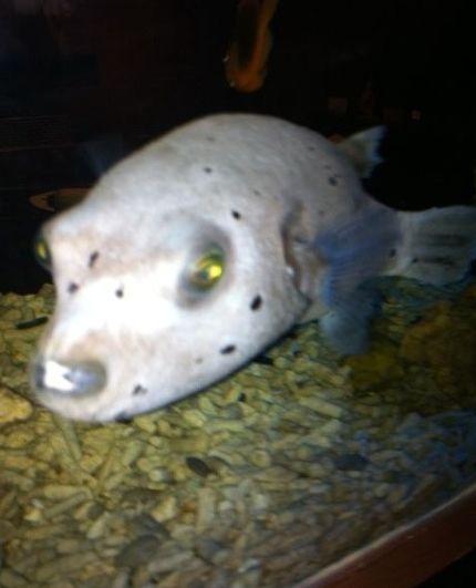 新浪旅游配图:请问这个是狗鱼吗? 图片来源:@乌苏里江特产