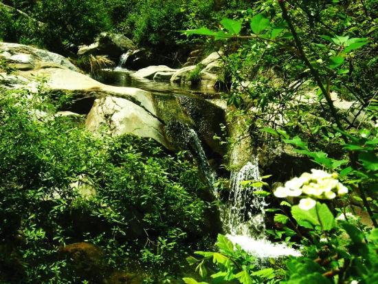 西安秦岭野生动物园官网图片