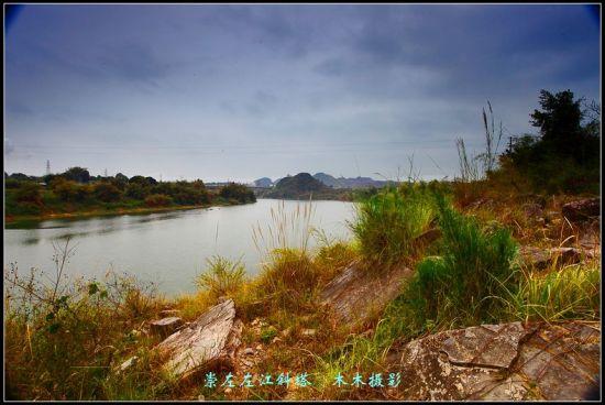 斜塔沿江风光 图:木木成不成林