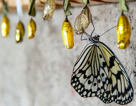 新浪旅游配图:小南村蝴蝶园 摄影:图片来自新浪微博