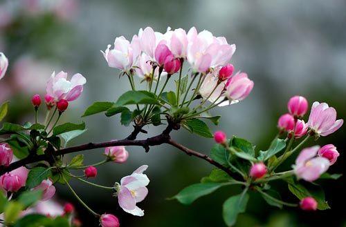 小蜗牛看苹果花故事_苹果花