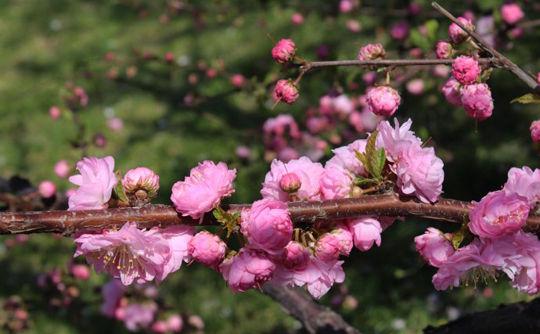 三月,被大雪封住的辽宁真是应了那句俗语春天后母面,入春的气候阴晴冷暖变化无常,可说到底,春天就是春天,大雪也阻挡不了万物要复苏的节奏,这个季度,一花一世界,一月一风情,大美辽宁,花儿正红!   辽宁的春天总是比别人来得稍晚一些,当祖国南方大地开始赏花约春天的时候,辽宁的三月却还在用雪花装扮,白雪却嫌春色晚,故穿庭树作飞花,三月,小编只能邀你看雪花了。 沈阳春雪 图片来源:新浪博主风吹麦浪lishirong