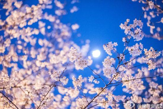 平面樱花折纸步骤图解