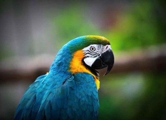 新浪旅游配图:北方森林动物园鹦鹉 图片来源:网络