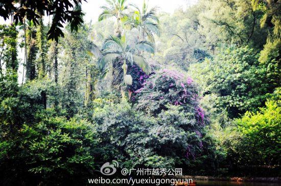 越秀山上树木芳华 作者:@广州市越秀公园 图片来源:微博