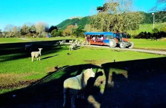 秦岭新西兰农场