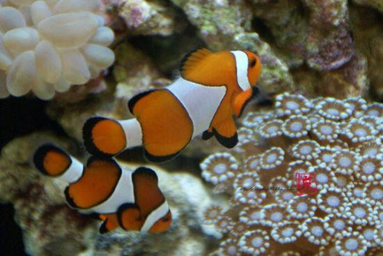 合肥海洋世界 與魚兒共舞圖片