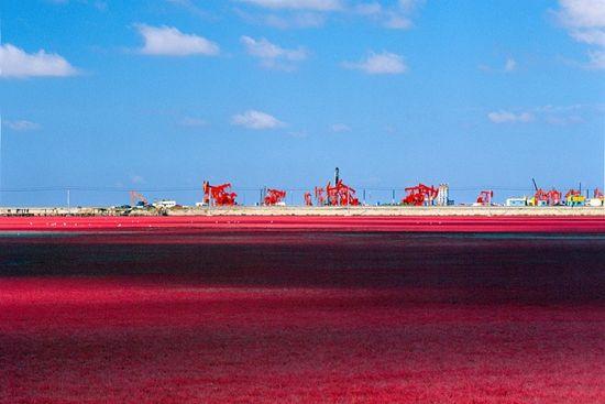 辽宁海滨上的绝美景致――红海滩