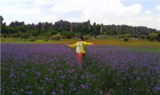 千亩紫顶龙芽花海震撼盛开