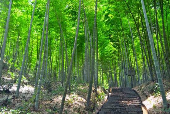 中国 湖南省 正文    蔡伦竹海旅游风景区位于耒水风光带上游,水成