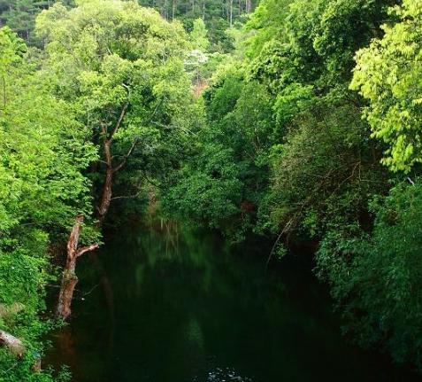 十万大山里的一汪清池 图:新浪博主/木木成不成林