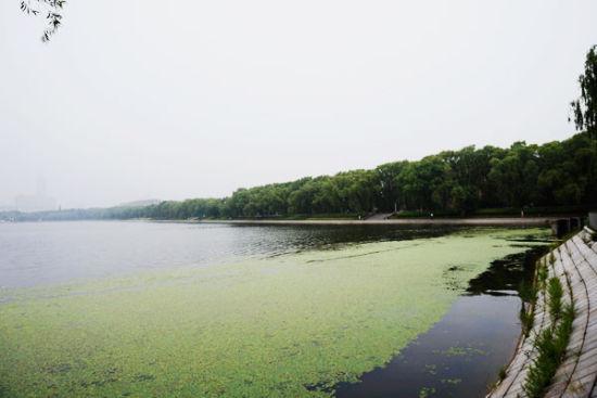 湖面上满满的都是小荷叶