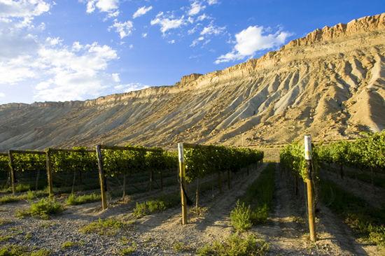 科罗拉多山谷下的葡萄园
