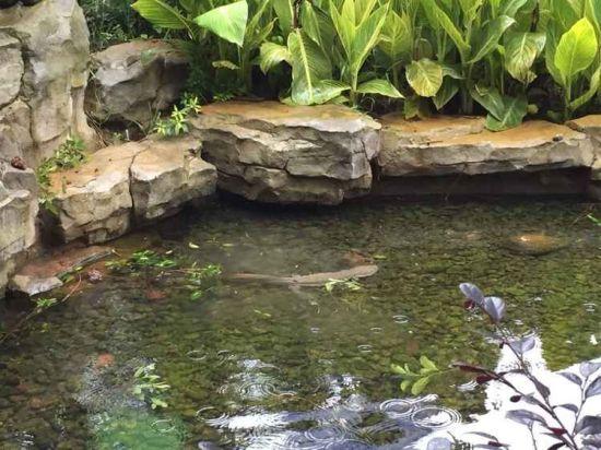 欧式水池内循环
