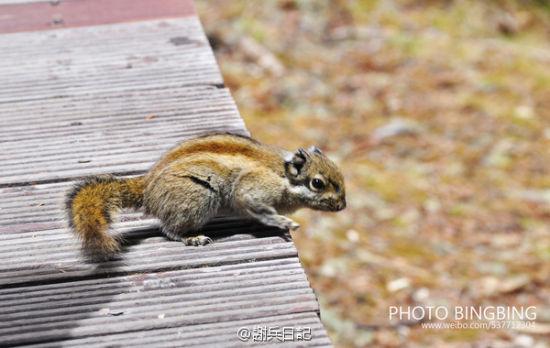 调皮可爱的小松鼠