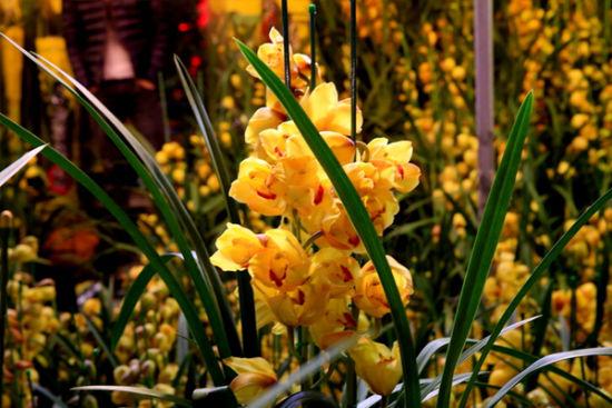 南二环朱雀花卉市场小景