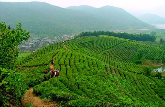这里的农业开发特色明显,有万亩杨梅生产基地,万亩滩涂,千亩药材,千亩桑园,千亩苗林,百亩桂花林,十里桃花沟等规模宏大的新农业发展格局。该镇的主要特产有杨梅,柑桔,茶叶。尤其是杨梅,已成为该镇一大特色产业,种植面积已达一万多亩,年产量4000多吨。其中马岳杨梅被认定为宁波市绿色无公害食品。同时,这里还利用蟹钳港,马岳门沿海滩涂资源,合理发展海水养殖,围塘养殖,滩涂养殖,休闲养殖等产业,取得了较好效益。 宁波泗洲头镇