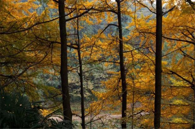 秋天的童话 成都这个地方美呆了